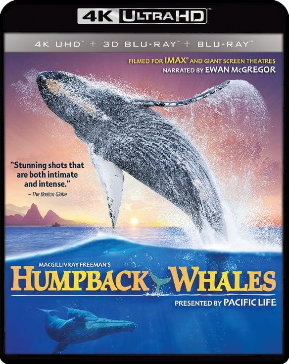 Humpback Whales 4K 2015 Ultra HD 2160p